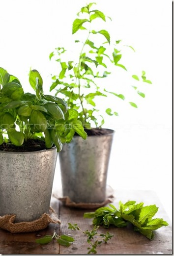 herbs-how-to-grow-an-herb-garden-1-of-1-e1306549108409
